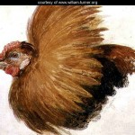Game-Cock, from The Farnley Book of Birds - William Turner