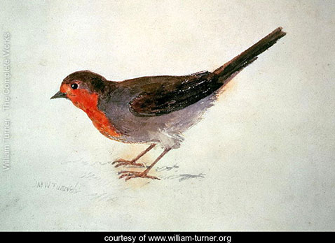 robin-from-the-farnley-book-of-birds-